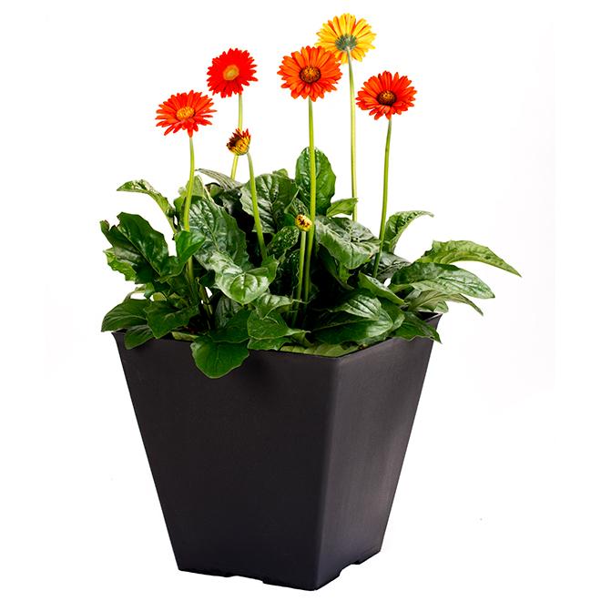 Pot Patio, carré, 12'', couleurs assorties