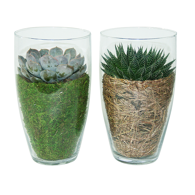 Vase de succulente