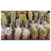 Assorted Cactus - 2.5""