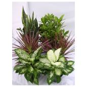 "Tropical Plant - 5"" - Assorted"
