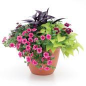 Patio planter - 10-in