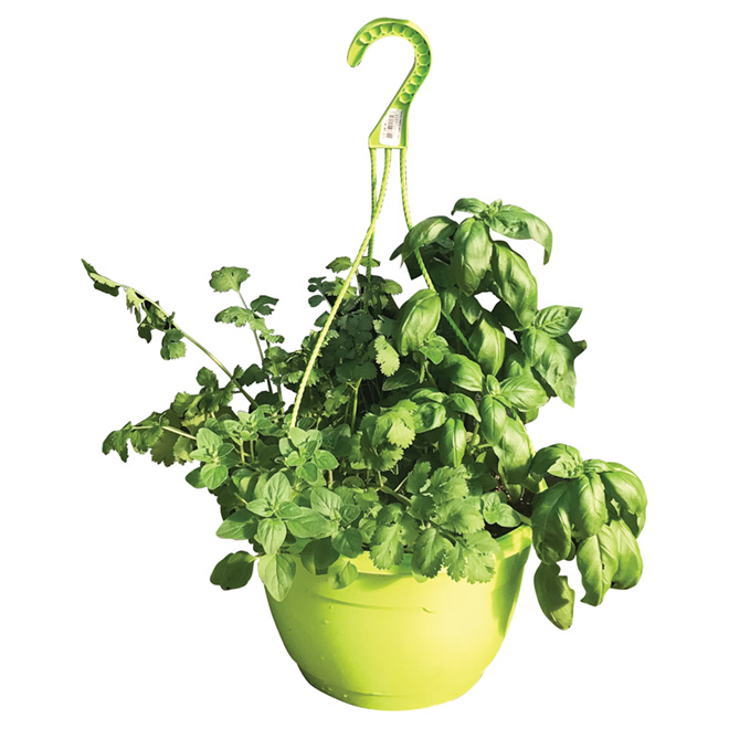 Fresh Herbs Hanging Basket - Decorative Pot - 10.5-in