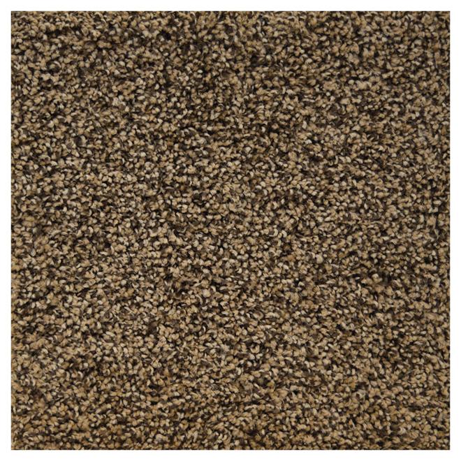 Cut Pile Textured Carpet - Root Coloured
