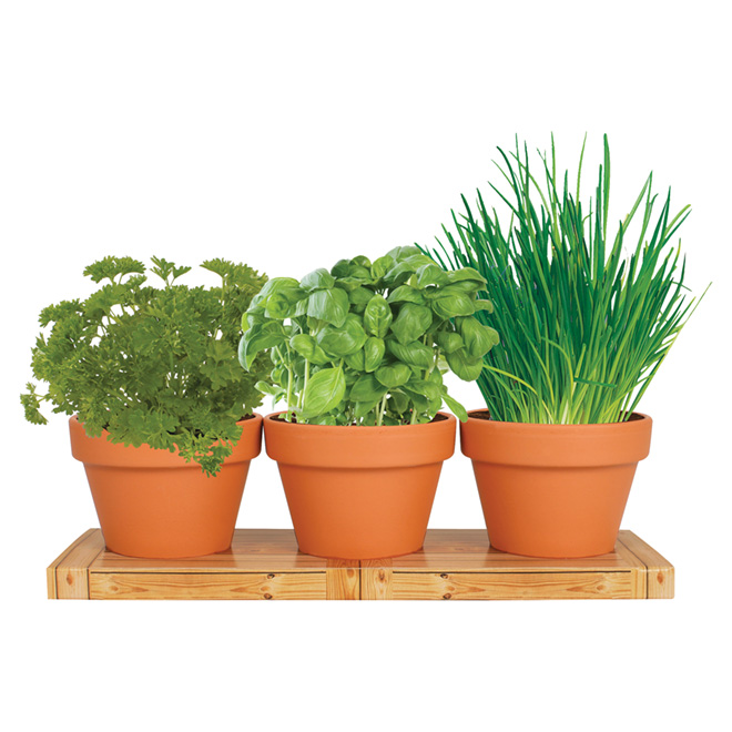 Totalgreen Indoor Kitchen Herb Trio Grow Kit - Bulbs 76703200-1