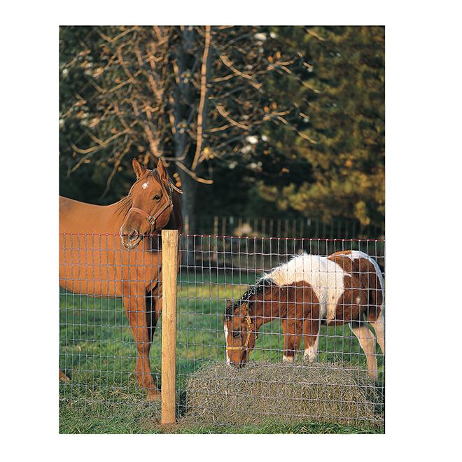 """Grillage sans prise de montée pour chevaux, 48"""" x 200'"""