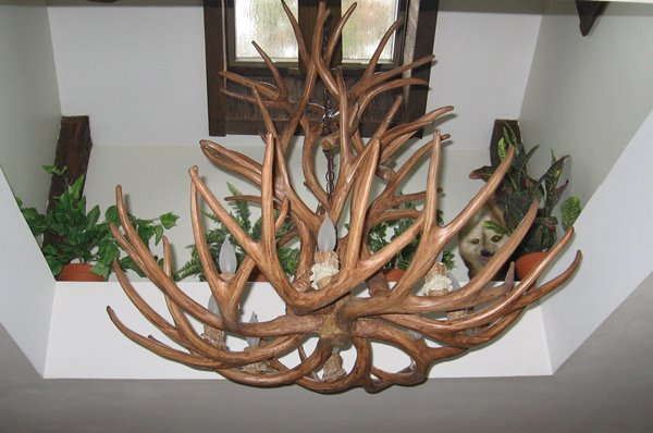 Canadian Antler Designs Reproduction Brown  8-Light Whitetail Antler Chandelier