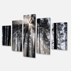 Sunbeams in the Forest-Black/White-Wall Art-32