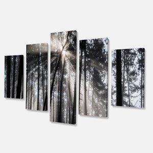 Rayons de soleil dans la forêt, noir/blanc, 32