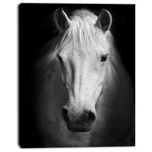 Designart Canada White Horse 30-in x 40-in Canvas Print Wall Art
