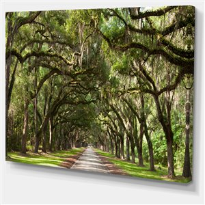 "Designart Canada Oak Tunnel - Photography  Print On Canvas - 40""x30"""
