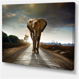 Designart Canada Solitary Elephant Canvas Print 30-in x 40-in