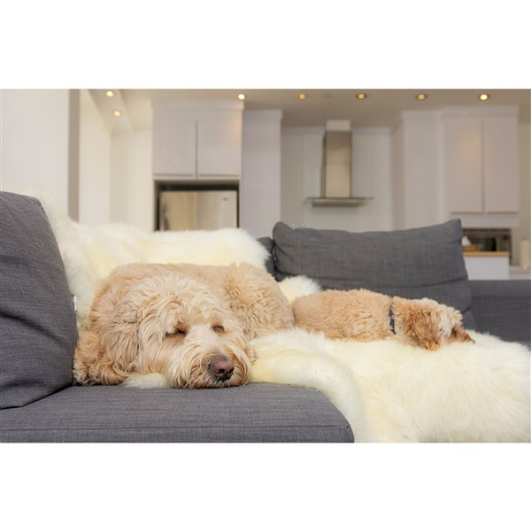 Natural by Lifestyle Brands 5-ft x 6-ft Natural New Zealand Sexto Sheepskin Rug