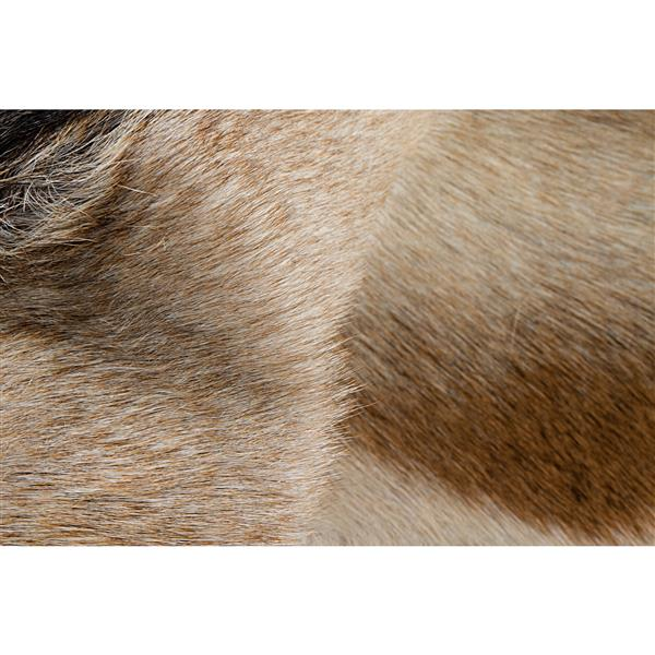 Natural by Lifestyle Brands Calfskin Rug - 2'x 3'- Tan/White