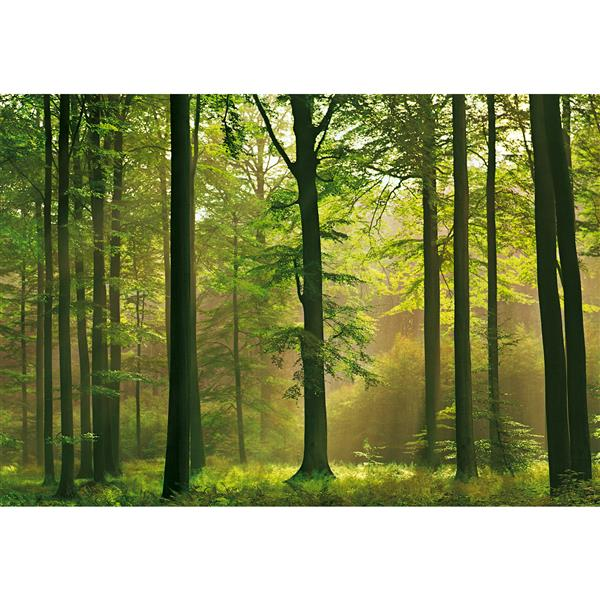 """Brewster Wallcovering Autumn Forest Wall Mural - 100"""" x 144"""""""