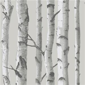 """Papier peint autocollant, bouleau, 20,5"""" x 216"""", gris"""