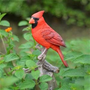 Hi-Line Gift Cardinal on Branch,87758-B