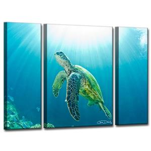 Ready2HangArt Sea Turtle Canvas Wall Décor Set - 40-in - Blue - 3 Pcs