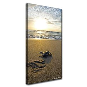 Baby Sea Turtle Canvas Wall Décor - 20