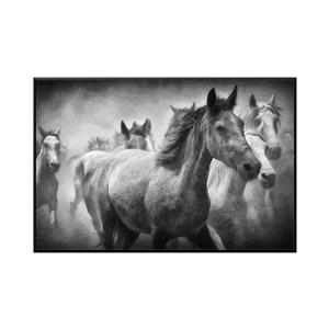 Stella.B Decor Shadow Framed Canvas with Black Frame - Horse - 48-in x 32-in