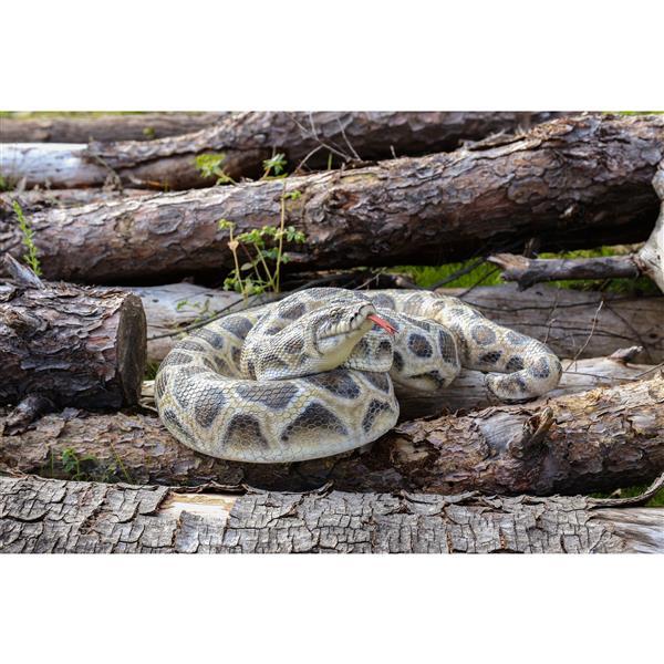 "Hi-Line Gift Decorative Garden Statue - Curled Up Python - 5.83"""
