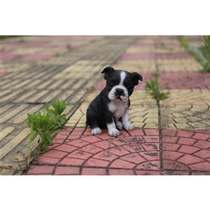 "Statue de jardin, chiot boston terrier, 6,5"""
