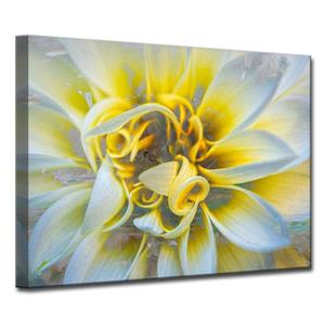 Ready2HangArt Wall Art Painted Petals Canvas 20-in x 30-in - Yellow