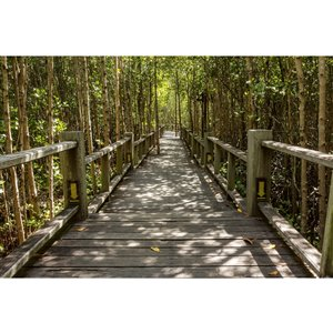 Dimex Mangrove Forest Wall Mural - 12-ft 3-in x 8-ft 2-in