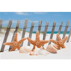 Dimex Starfish Wall Mural - 12-ft 3-in x 8-ft 2-in