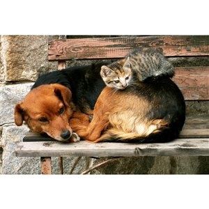 Dimex Cat and Dog Wall Mural - 12-ft 3-in x 8-ft 2-in