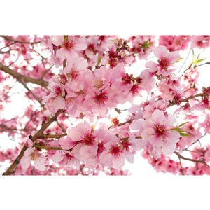 Dimex Apple Blossom Wall Mural - 12-ft 3-in x 8-ft 2-in