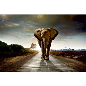 Dimex Walking Elephant Wall Mural - 12-ft 3-in x 8-ft 2-in