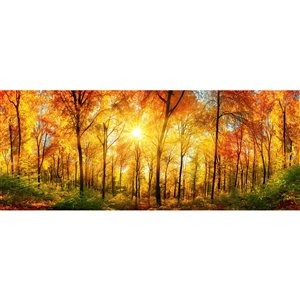 Dimex Sunny Forest Wall Mural - 12-ft 3-in x 4-ft 9-in
