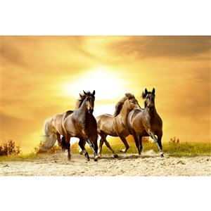 Dimex Horses in Sunset Wall Mural - 12-ft 3-in x 8-ft 2-in