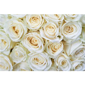 Dimex White Roses Wall Mural - 12-ft 3-in x 8-ft 2-in