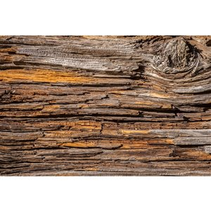Dimex Tree Bark Wall Mural - 12-ft 3-in x 8-ft 2-in