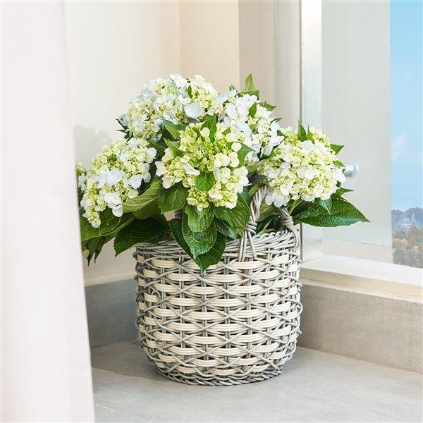 Panier à linge ou à fleurs avec poignées Valeria de Vifah, en résine, rond, 18 po