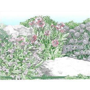 Bordure de papier peint de 7,99 po préencollée par Dundee Deco, vert, beige, rose