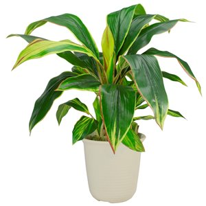 Northlight 25-in Green and Red Artificial Dracaena Plant