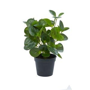 Grayson Lane 13.45-in Green Artificial Peperomia Plant