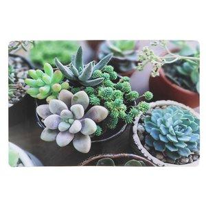 IH Casa Decor Succulents Plastic Placemat - Set of 12