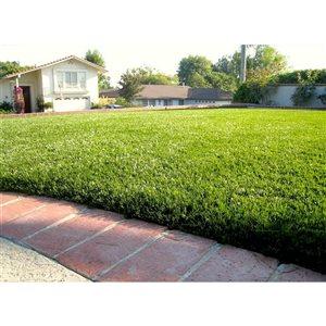 Tapis d'herbe artificielle fétuque Sequoia par Green As Grass, 25 pi x 15 pi