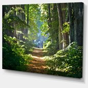 Forest Morning Canvas Print - 30